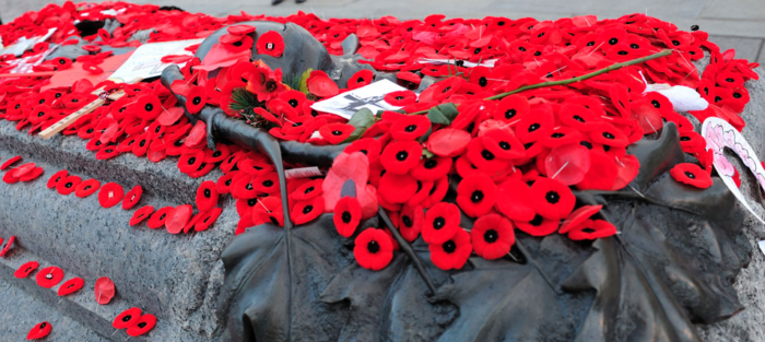 Red Poppies In November What Is Remembrance Day The Immigrant